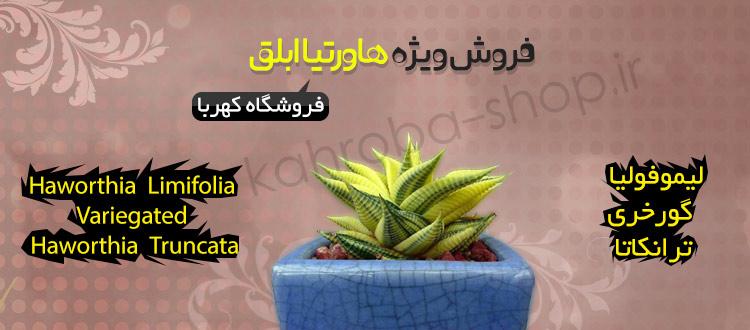 kahroba_1_b